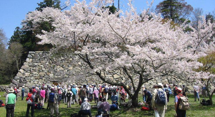 高取城 桜