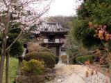 光雲寺の桜