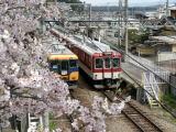 近鉄壺阪山駅の桜