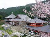 壷阪寺の桜